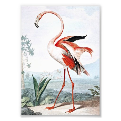 Pink Flamingo Bird Vintage Art Photo Print | Zazzle