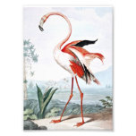 Pink Flamingo Bird Vintage Art Photographic Print