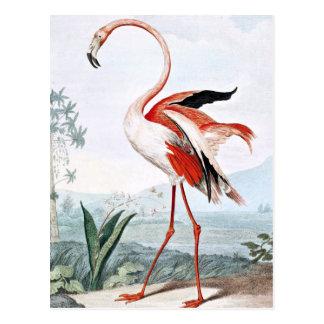 Pink Flamingo Bird Vintage Art Postcard