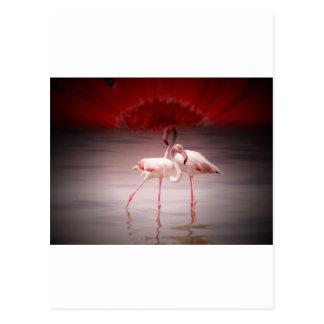 Pink Flamingo Dance Postcard
