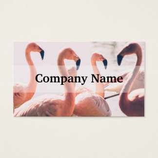 Pink Flamingo Flock, Bird Photography Business Card