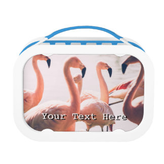Pink Flamingo Flock, Bird Photography Lunch Box