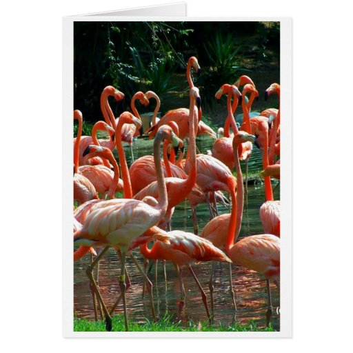 Pink Flamingo group, lots of flamingoes picture! Greeting Card