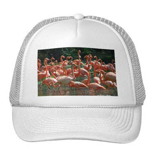 Pink Flamingo group, lots of flamingoes picture! Mesh Hats