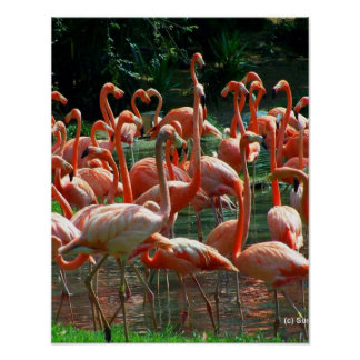Pink Flamingo group, lots of flamingoes picture! Print