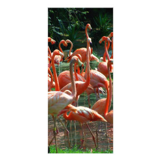 Pink Flamingo group, lots of flamingoes picture! Rack Card