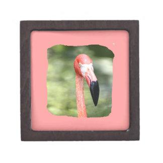 Pink flamingo head photograph green background gift box