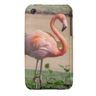 Pink flamingo iPhone 3 cover