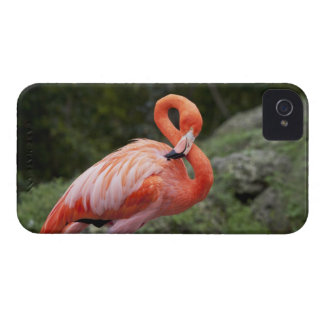 Pink Flamingo iPhone 4 Cover