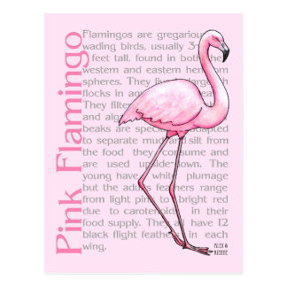 Pink Flamingo On Text Post Card
