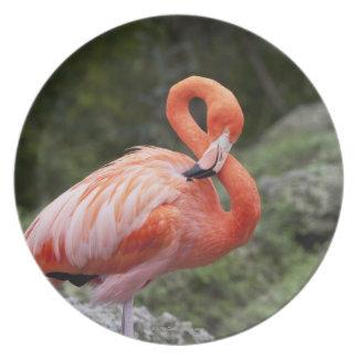 Pink Flamingo Dinner Plates