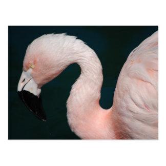 Pink Flamingo Postcard