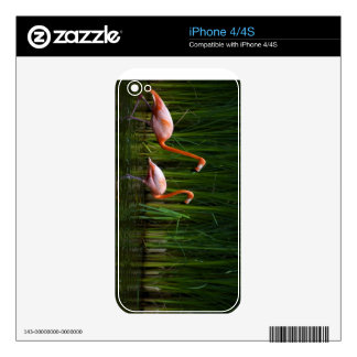 PINK FLAMINGO SKIN FOR THE iPhone 4