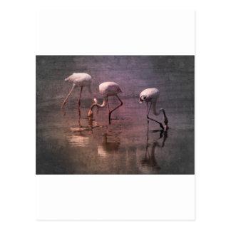 Pink Flamingo Sunrise Image Postcard
