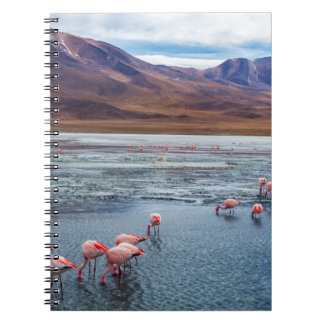 Pink Flamingoes in Bolivia Notebook