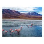 Pink Flamingoes in Bolivia Postal
