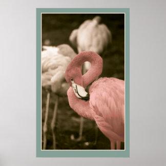 Pink Flamingoes Poster
