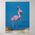 Pink Flamingos at the Lake Poster