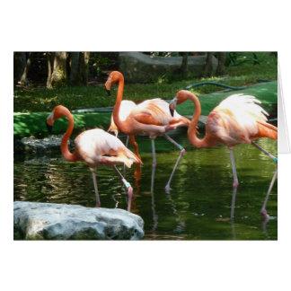 Pink Flamingos, by Brad Hines Greeting Card