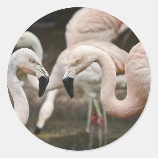 Pink flamingos classic round sticker