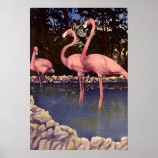 Pink Flamingos, Florida Poster