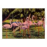 Pink Flamingos in Florida Greeting Card