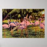 Pink Flamingos in Florida Poster