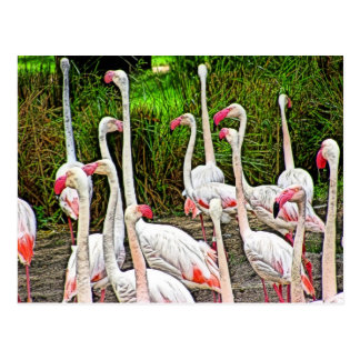 Pink Flamingos Painting Postcard