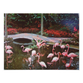 Pink Flamingos Photo Print