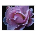 pink flor de rosa tarjeta postal