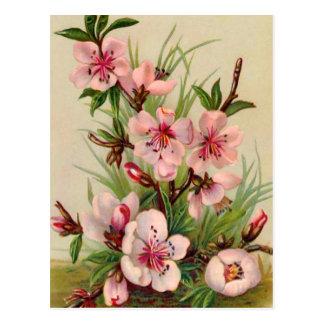 Pink Floral Arrangement Postcard