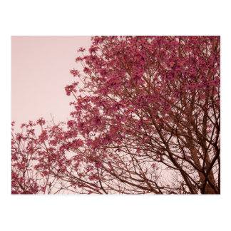 Pink Floral Branches Postcard