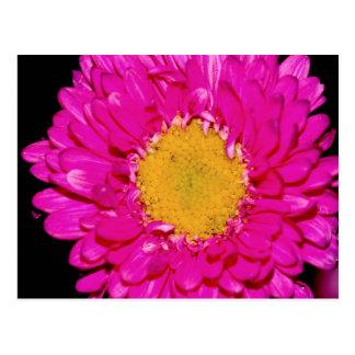 Pink Floral Postcard