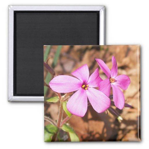 Pink Flower2  Magnet