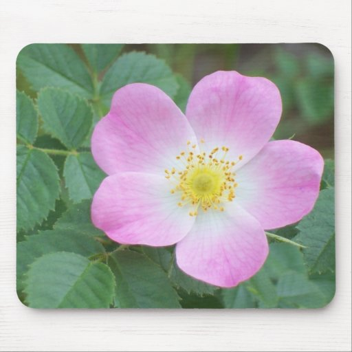 Pink Flower 01 Mouse Pad