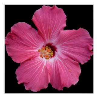 Pink Flower 24 x 24 Poster