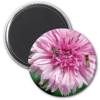 Pink Flower and Bugs Magnet