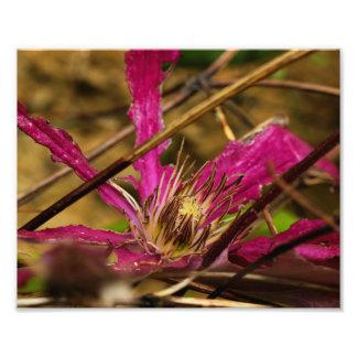 Pink Flower Art Photo Print