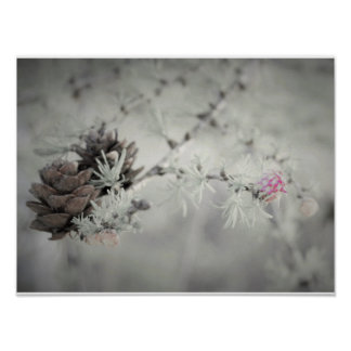 Pink flower at Larch, Black and White photo Poster