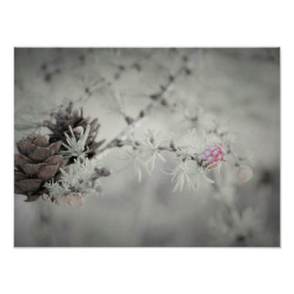 Pink flower at Larch Black and White Poster
