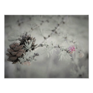 Pink flower at Larch, Black and White Poster