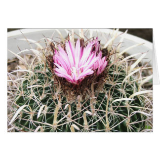 Pink Flower Barrel Cactus Greeting Card