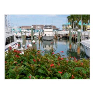 pink flower boats marina florida scene postcard