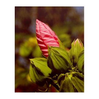 Pink Flower Bud Floral Garden Acrylic Wall Art