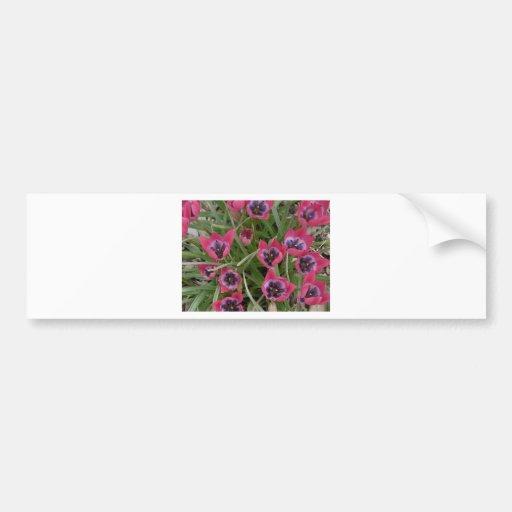 pink flower bumper stickers