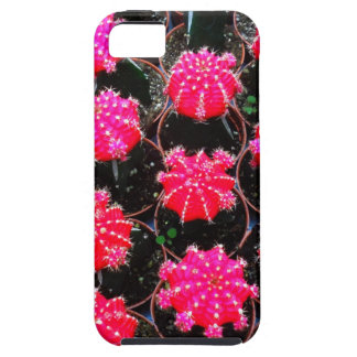Pink Flower Cactus Plant Photography iPhone 5 Covers
