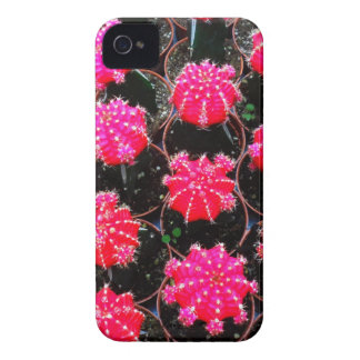Pink Flower Cactus Plant Photography Case-Mate iPhone 4 Case