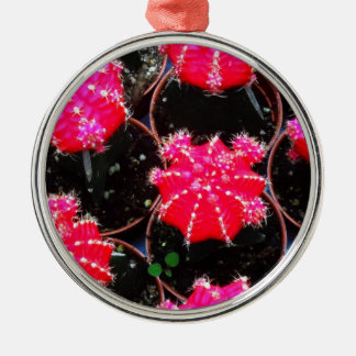 Pink Flower Cactus Plant Photography Ornament