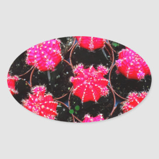 Pink Flower Cactus Plant Photography Oval Sticker