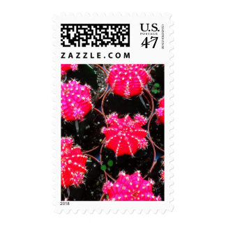 Pink Flower Cactus Plant Photography Postage